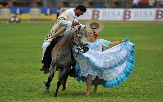 caballo de paso peruano bailando marinera